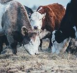 annie-spratt-unsplash regionale landwirtschaft